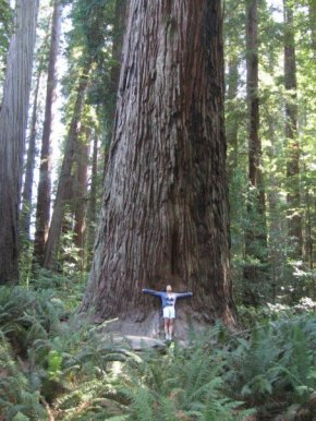 Redwood Forest, Circa 2006